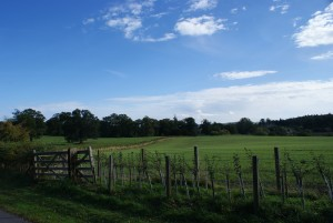 country field with gate and fence