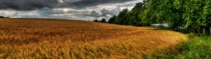 douglas-let-farms