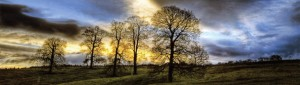dramatic photograph of trees against a sky line